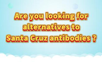 40,000 alternatives to Santa Cruz antibodies
